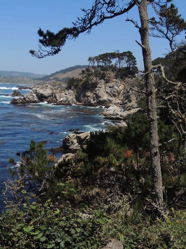 Point Lobos California Walking Around Nature_collection Eyem Nature Lover Ocean View