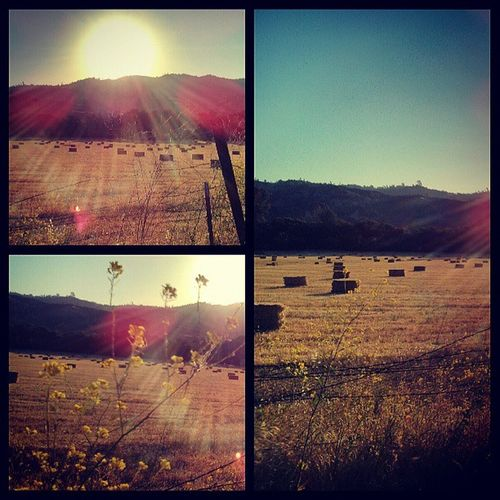 Capay Valley ...Landscape Haybales  Triptych Morning Lensflare Sun