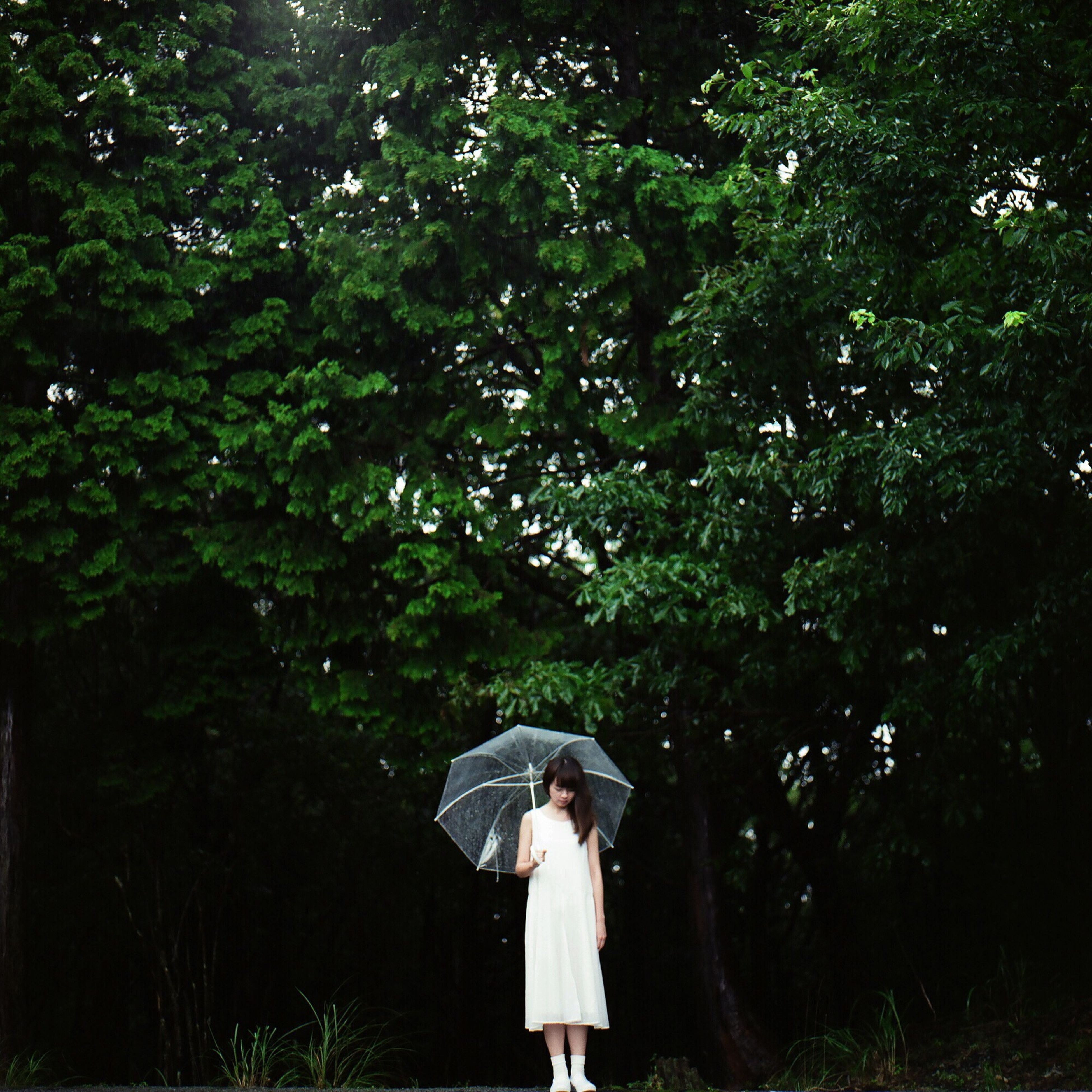 tree, lifestyles, full length, casual clothing, standing, rear view, leisure activity, three quarter length, young adult, person, young women, walking, growth, side view, childhood, nature, green color