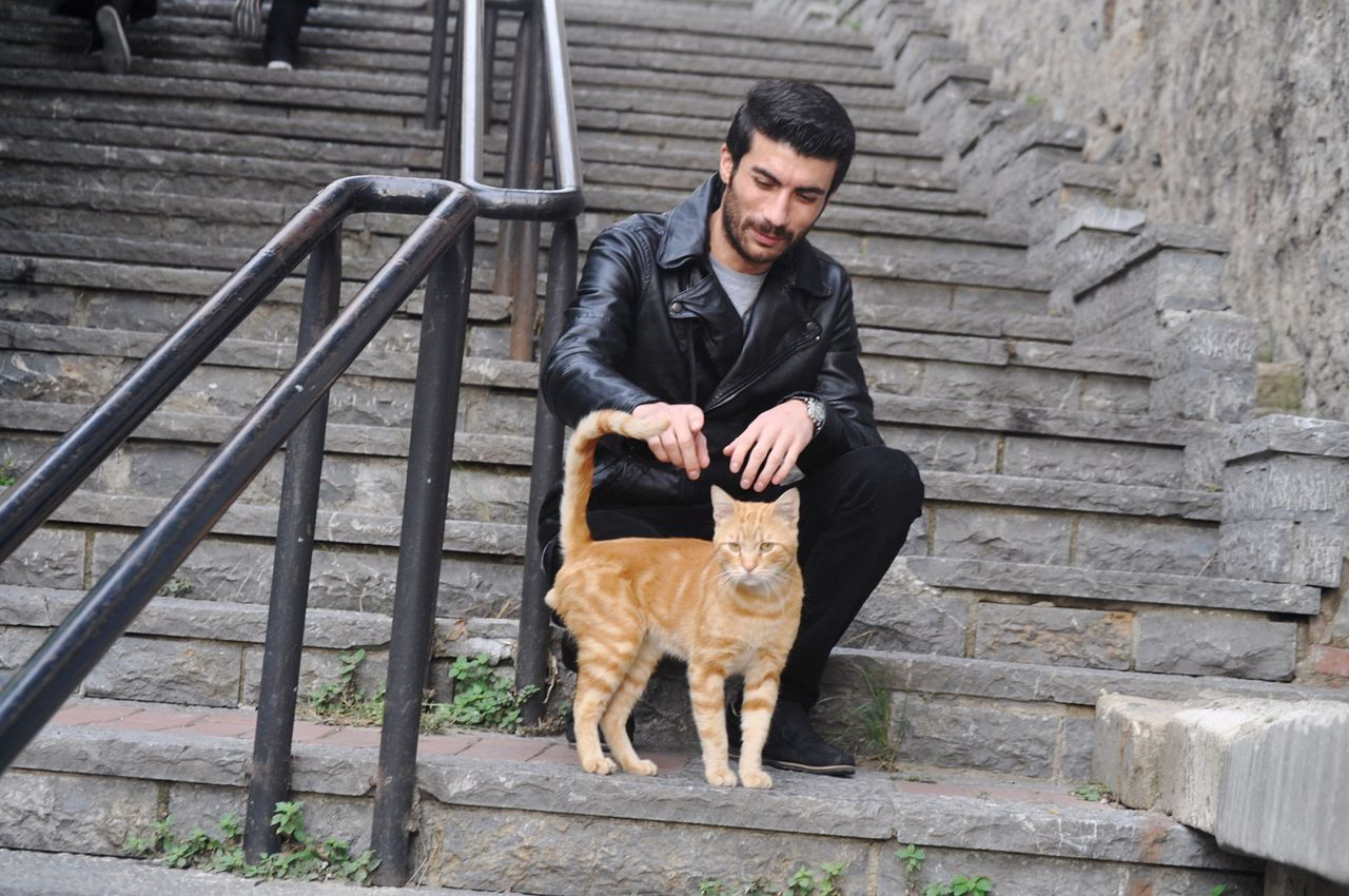 Cat♡ Hello World Model Istanbul Turkey Popüler Fotoğraflar Small And Swift Hi! Turkey Turkish Relaxing