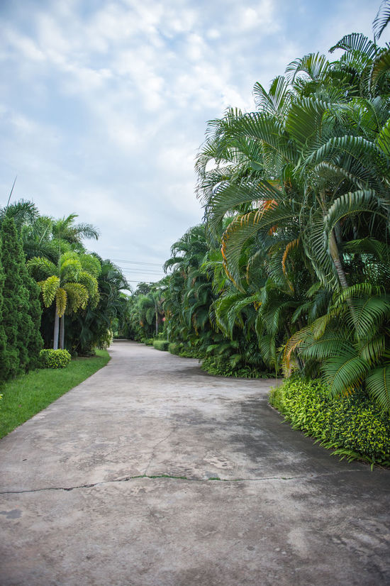 Agriculture Cement Concrete Day Freshness Garden Green Growth Landscape Nature No People Outdoors Palm Tree Pathway Plant Sky Tree