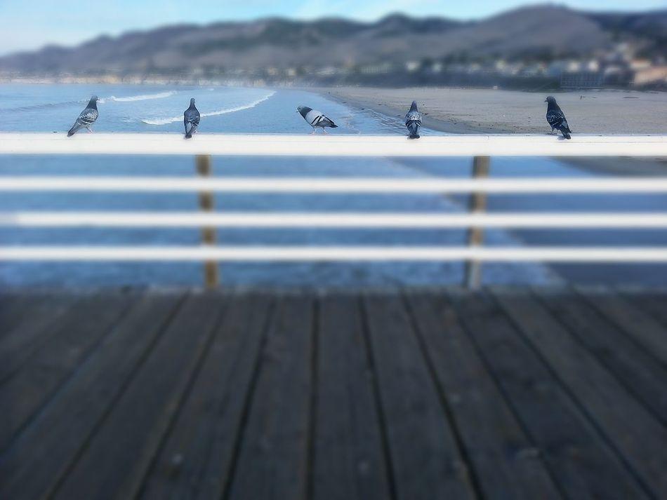 Modelingbirds