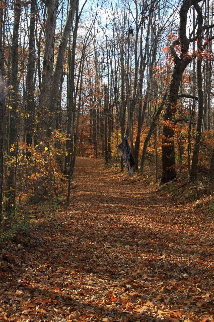Footpath Covered With Dry Leaves In Forest During Autumn