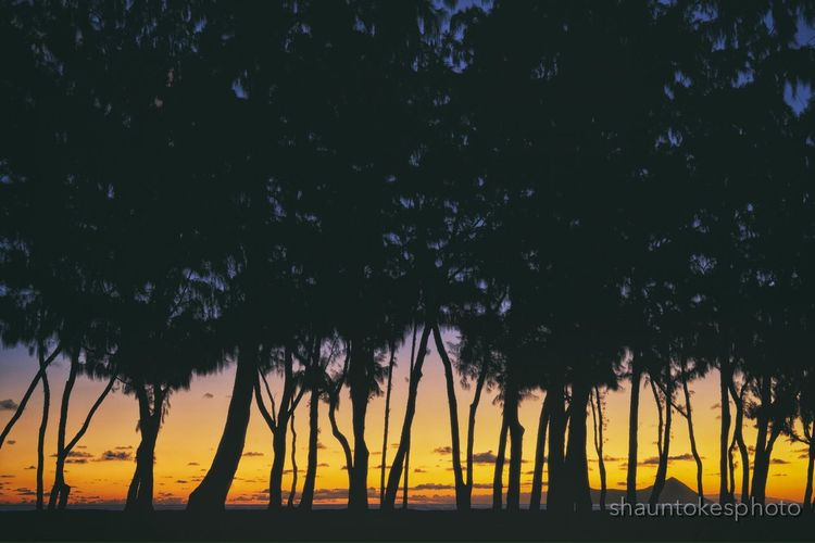 Rise & Shine Sunrise Trees Silhouette EyeEm Best Shots