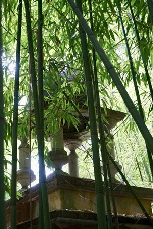Bell Sunlight Tranquility Bamboo Bamboo Grove Bell Tower Buddhism Buddhist Temple Built Structure Day Green Color Growth Low Angle View Nature No People Outdoors Serene Temple Tree