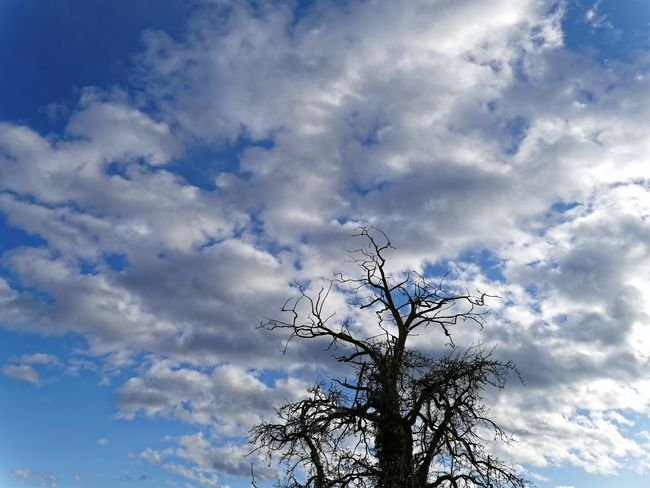 Atmosphere Atmospheric Mood Bare Tree Beauty In Nature Cloud Cloud - Sky Cloudy Dramatic Sky Dusk Majestic No People Orange Color Outdoors Overcast Scenics Silhouette Sky Sunset Tranquility Weather