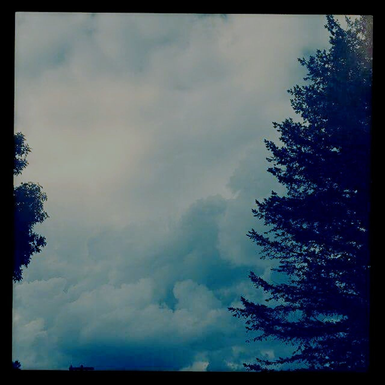 tree, nature, sky, beauty in nature, low angle view, tranquility, no people, scenics, outdoors, cloud - sky, day, scenery
