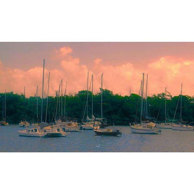 Bloodline  @bloodline Boat Bateau Port Sang Sea CoconutGrove