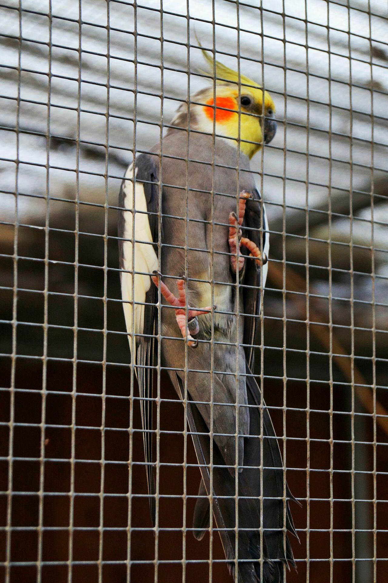 Animal Themes Bird Day No People Nature Weingarten Vogel Vogelpark Outdoors Close-up One Animal Sony Alpha Px58 Draußen