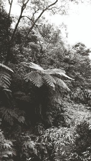 Jungle Fern Palm Tree Shades Of Grey