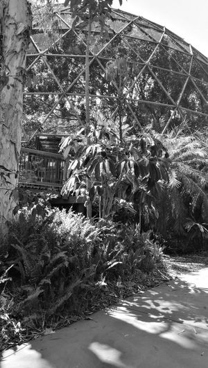 Blackandwhite Day No People Outdoors Nature