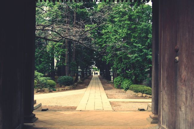 Japan Setagaya Tree Diminishing Perspective Tree Trunk Pathway Walkway The Way Forward Tranquility Growth Footpath Branch Pedestrian Walkway Tranquil Scene Entrance Narrow Day Nature Outdoors Scenics Solitude Long
