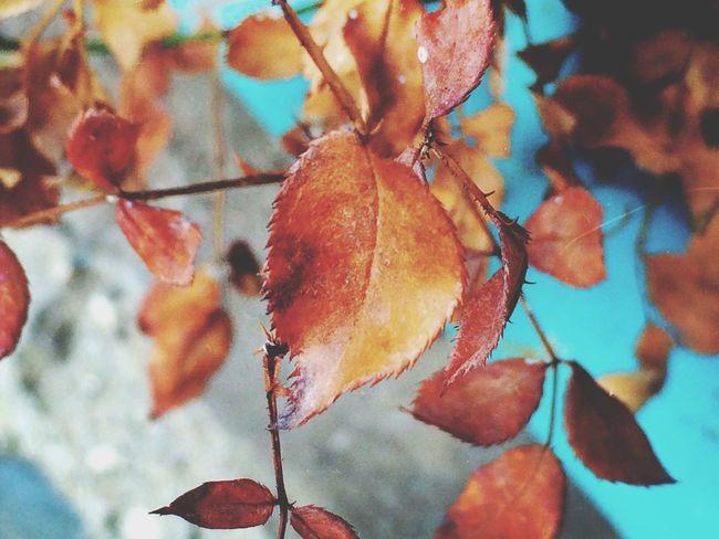 Autumn IPhone Photography Nature