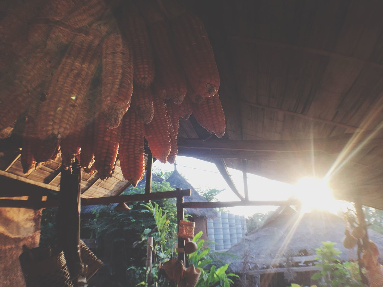 sunlight, hanging, day, sun, no people, outdoors, drying, nature, close-up, freshness