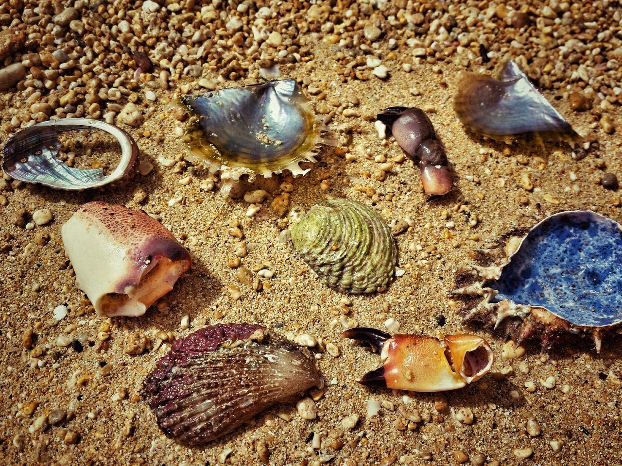 Beautiful stock photos of death, Animal Body Part, Animal Shell, Broken, Crab - Seafood