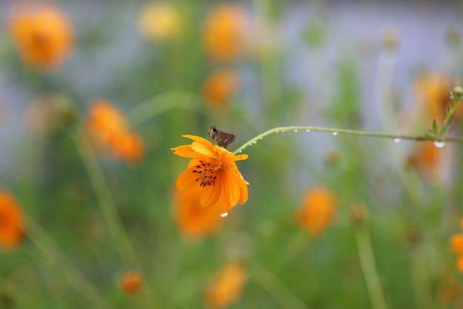 Flower Canon_camera Canon70d EyeEm Best Shots 雨 Rain Rainy Days