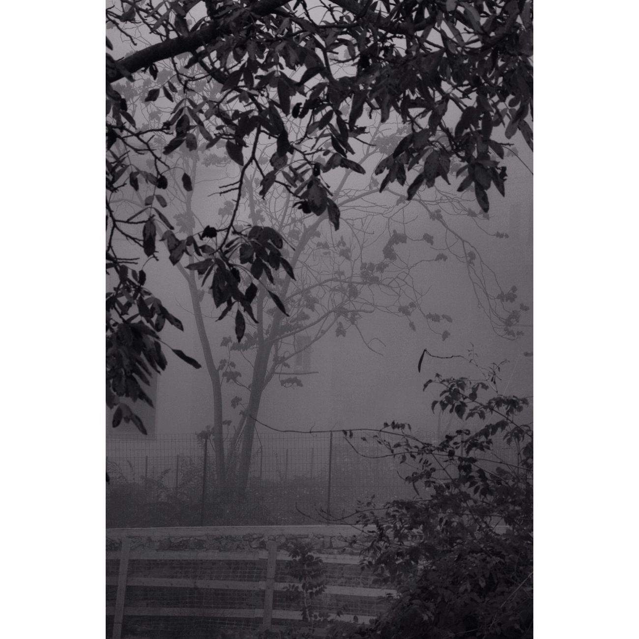 Blackandwhite Monochrome nature fog tree