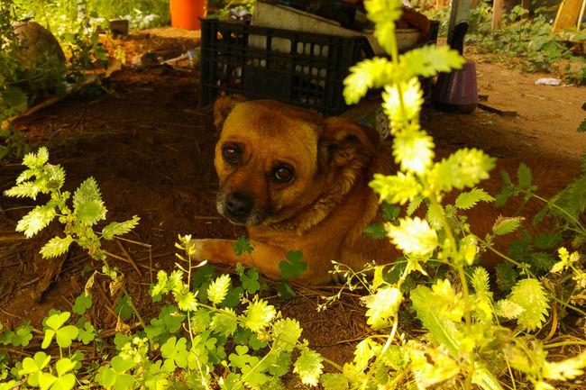 Can morriñento - Sad dog Perro Perros❤ Dog Dog❤ Mascota Puppy Verano Summer Enjoying Life Galicia Galicia, Spain Mobile Photography LG G4 Lg G4 Photography Triste Tristeza Sad Sadness