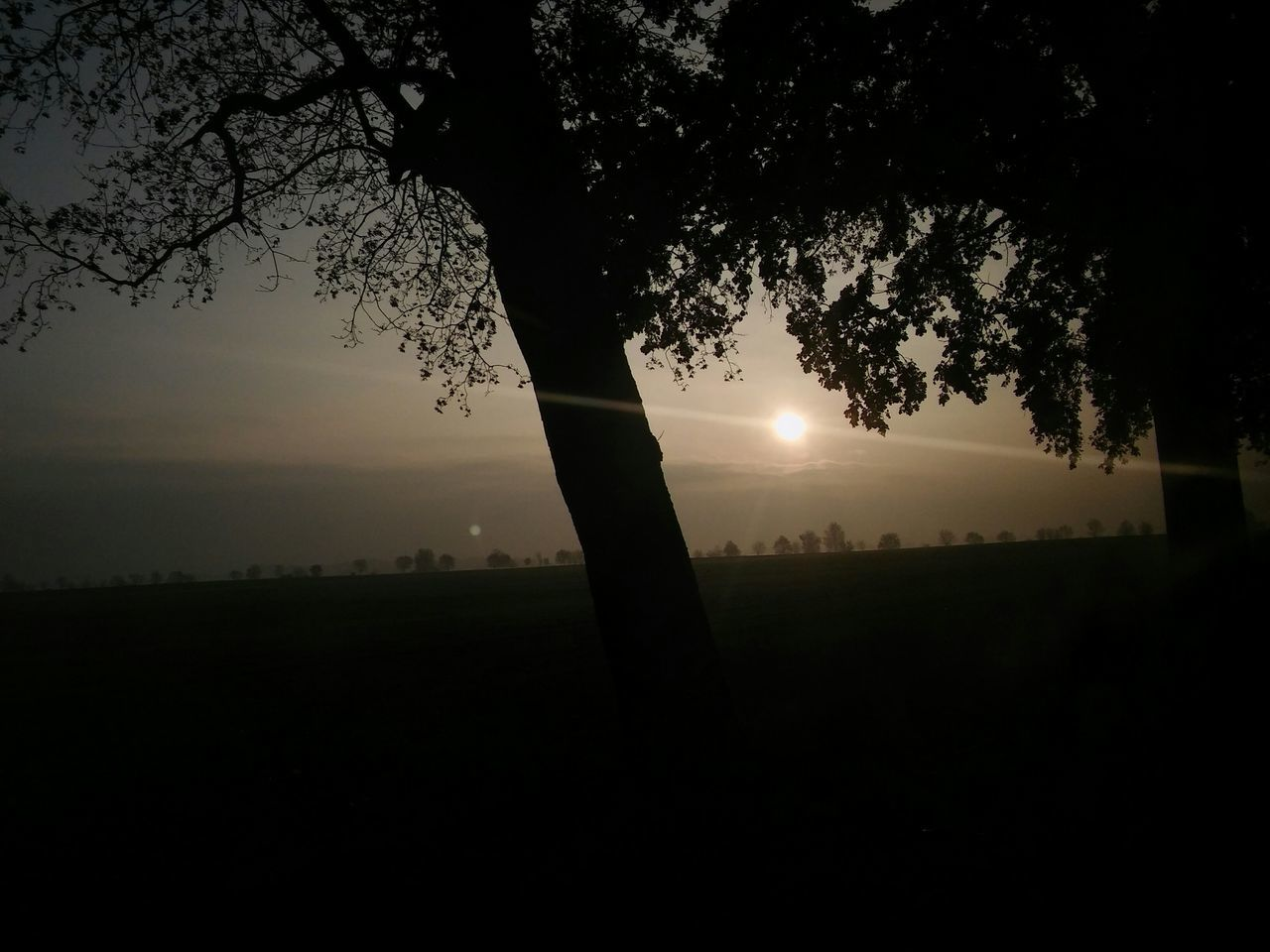 Silhouette Of Trees On Landscape At Sunset