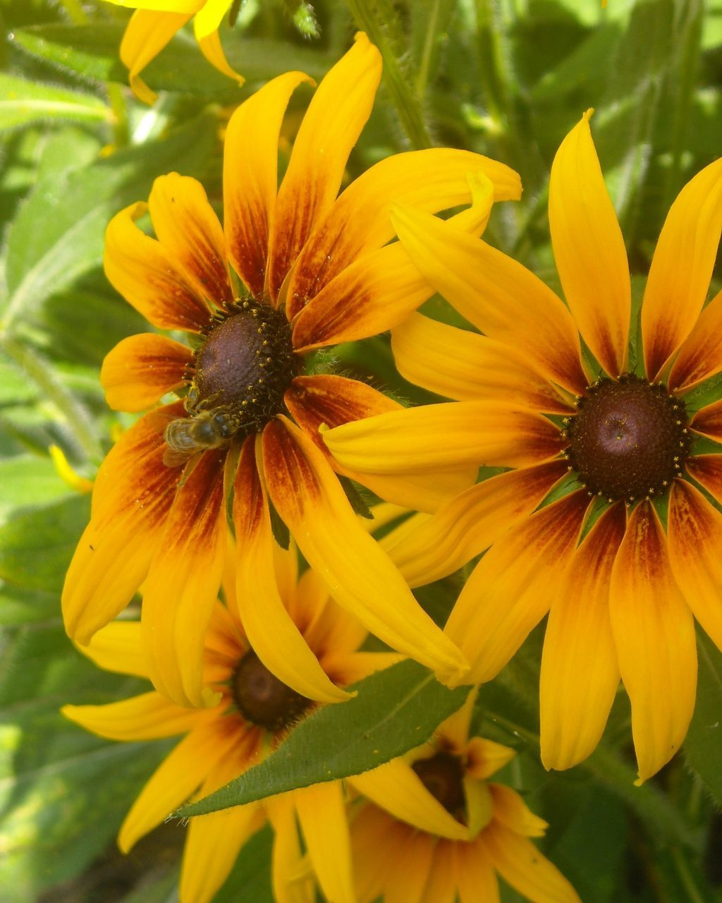 flower, petal, fragility, freshness, nature, flower head, beauty in nature, growth, yellow, plant, one animal, pollen, no people, close-up, blooming, outdoors, day, animal themes, animals in the wild, black-eyed susan