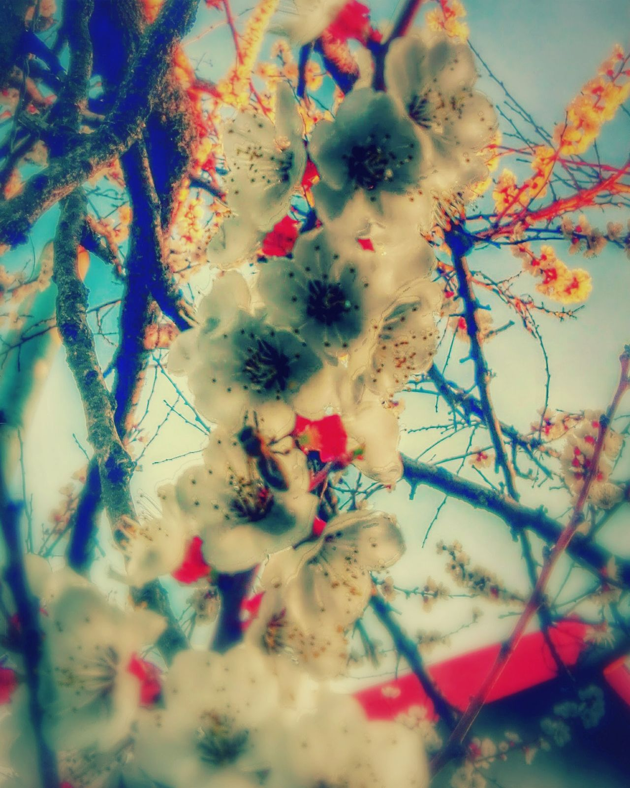 Multi Colored No People Flower Sky Close-up Tree Nature Backgrounds Flowers Apricot Blossom Veronica Ionita Wolfzuachis Ionitaveronica Showcase: March Eyeem Market @WOLFZUACHiV Showcase: 2017 Veronicaionita Huaweiphotography Wolfzuachiv On Market Edited By @wolfzuachis Flower Head Apricot Blossoms Colorful EyeEmNewHere