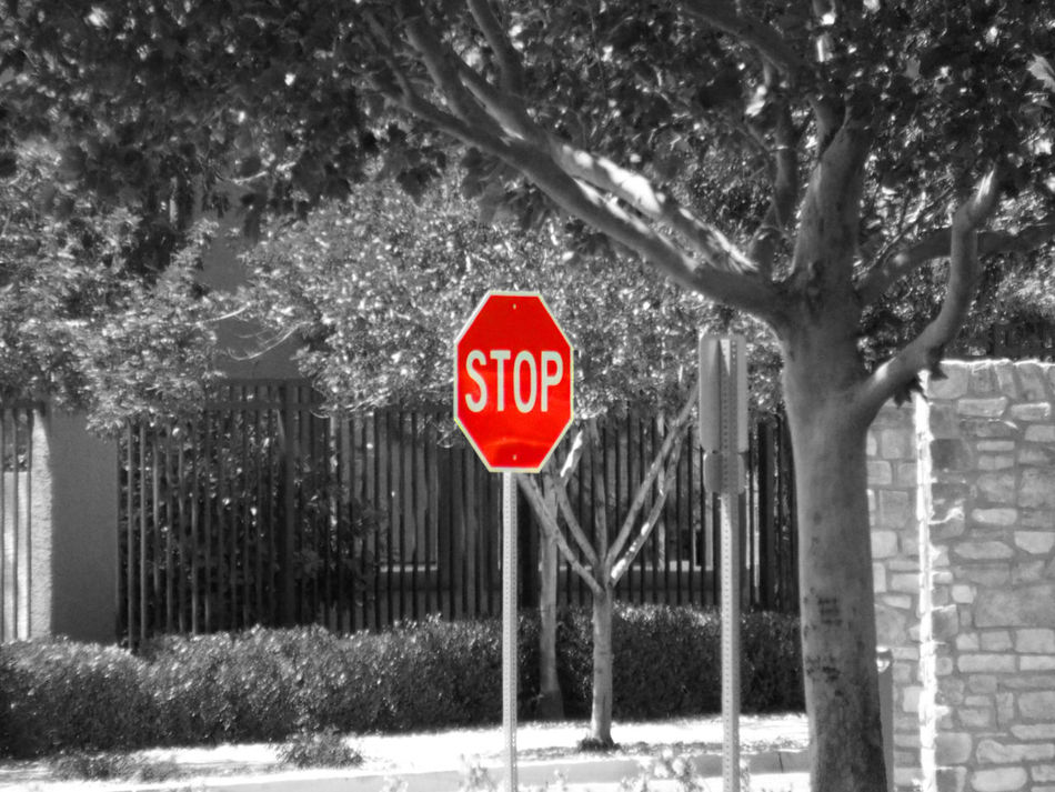 Tree Text Stop Sign Communication Warning Sign Danger No People Stop - Single Word Outdoors Red Day Road Sign Las Vegas Gray Scale  Void Of Color