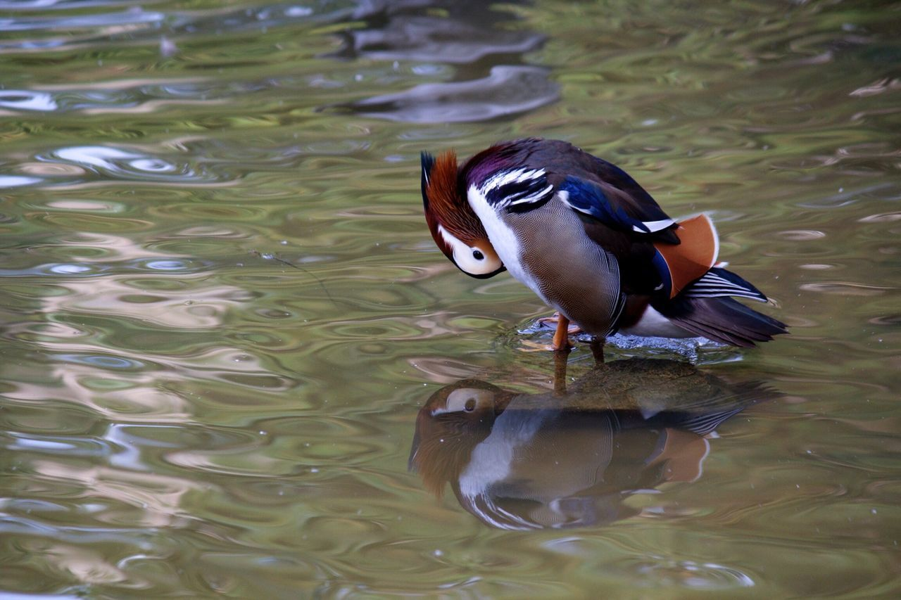 Beautiful stock photos of river, Animal Behavior, Animal Themes, Bird, Cleaning