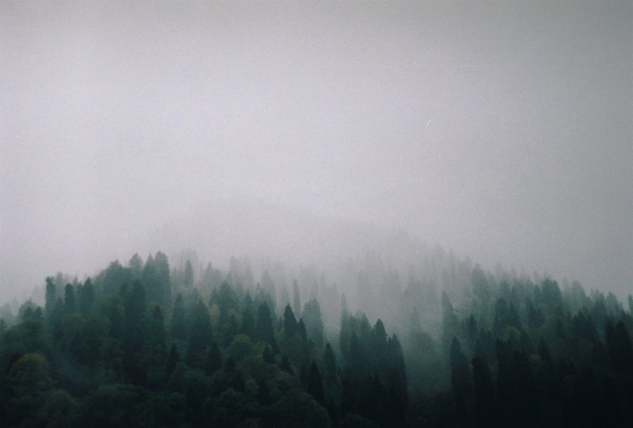 The Great Outdoors - 2017 EyeEm Awards Tree Fog Nature Mist Forest Weather Hazy  Foggy Beauty In Nature No People Scenics Tranquility Tranquil Scene Landscape Mountain Outdoors Sky Day Growth Freshness Foggy Morning Foggy Day Foggy Weather Trees Break The Mold in Turkey Neighborhood Map