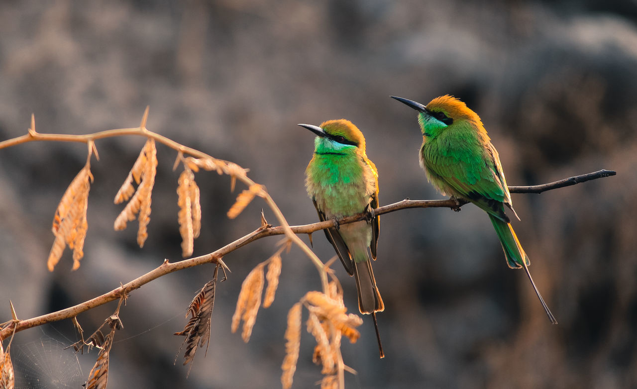 Bee Eaters Animal Themes Animal Wildlife Animals In The Wild Bee Eater Bird Branch Close-up Composition Day Focus On Foreground Nature No People Outdoors Perching Photography Photooftheday Sunlight