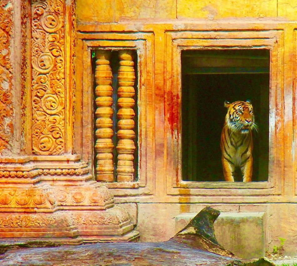 Animal Photography Animals In The Wild Art Built Structure Carving - Craft Product Closed Day Design Entrance No People Ornate Tigers Tigers Lovers Wood - Material Wooden