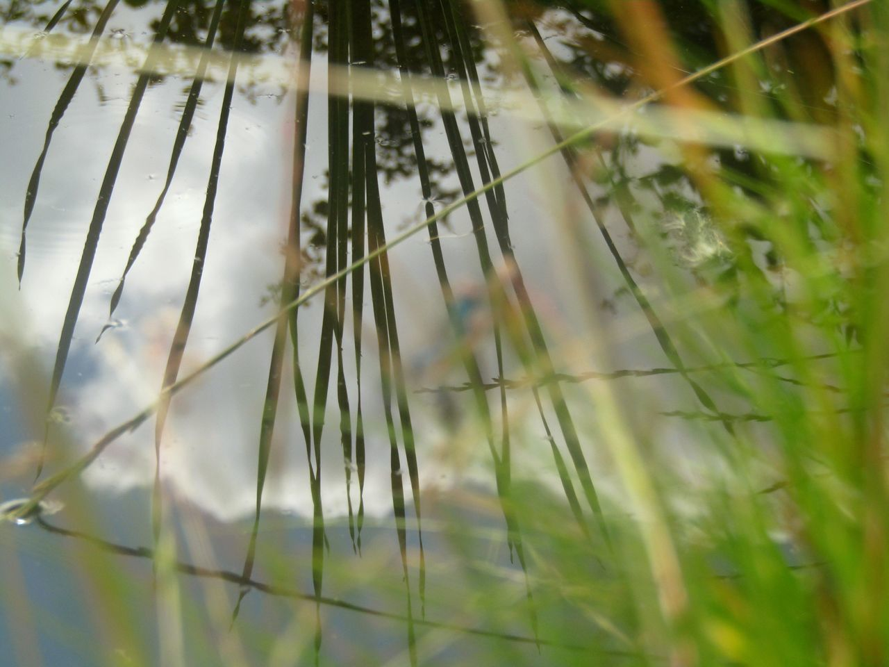 nature, growth, grass, day, no people, outdoors, selective focus, plant, beauty in nature, close-up, fragility, water, freshness