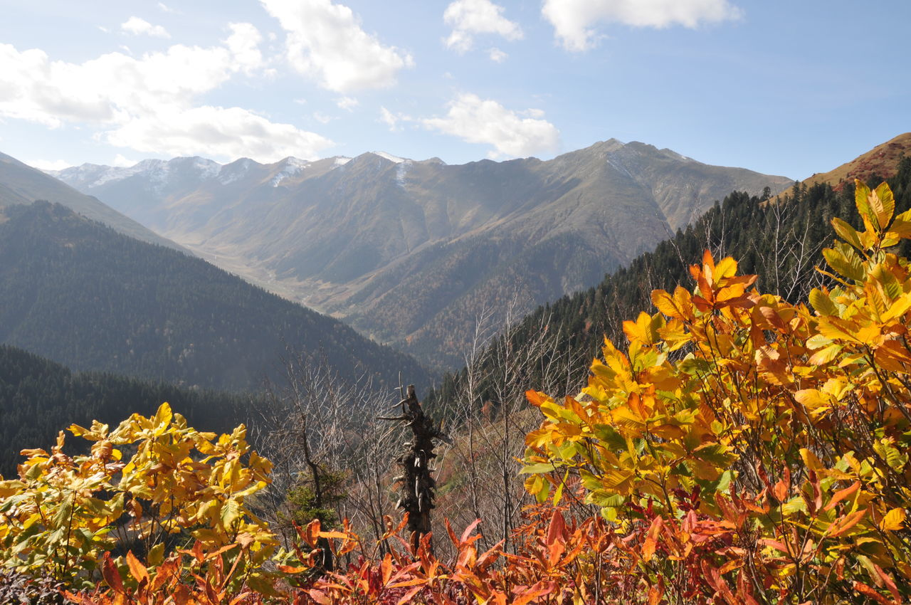 Best EyeEm Shot Bestoftheday Blacksea Climbing Green Highlands Kackar Karadeniz Love Mountain Nature Rize Sun View Wildlife