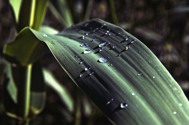 Beauty In Nature Close-up Drops Drops Of Water Fragility Green Color Leaf Nature Nature Nature Photography Plant The Week On Eyem