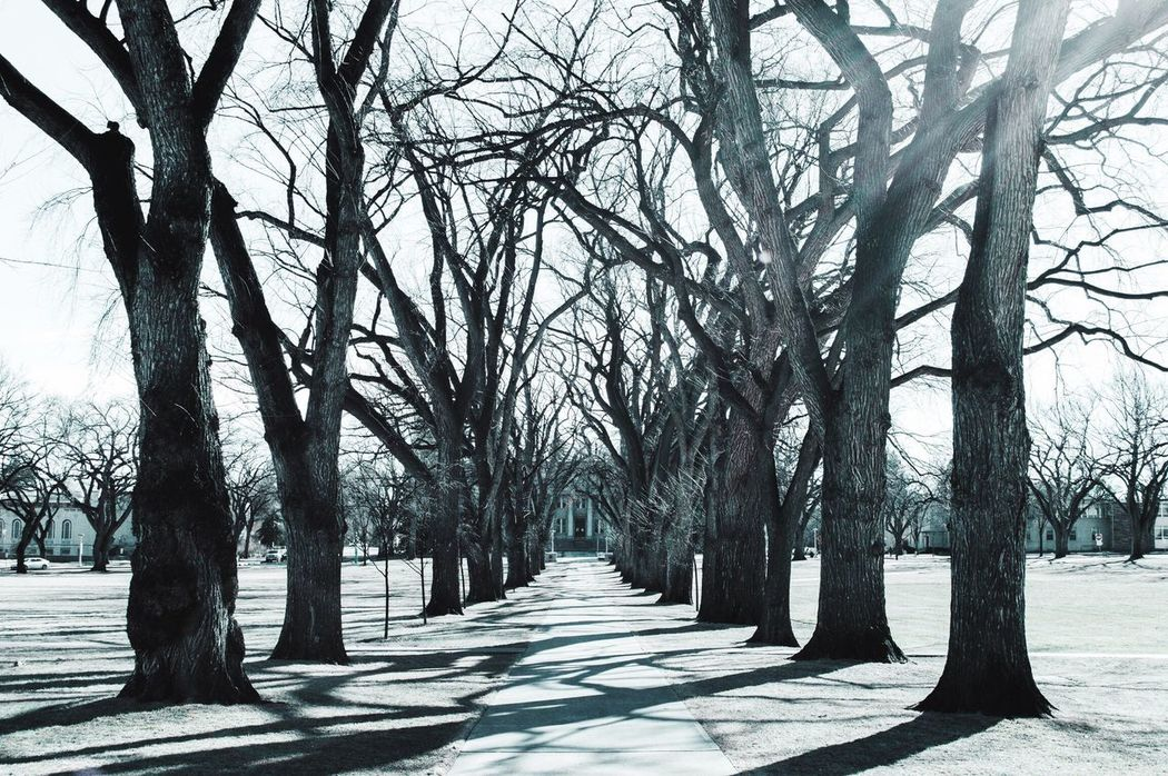 The City Light Tree Outdoors Tranquility Nature Day Scenics No People Symmetry Fortcollins Colorado