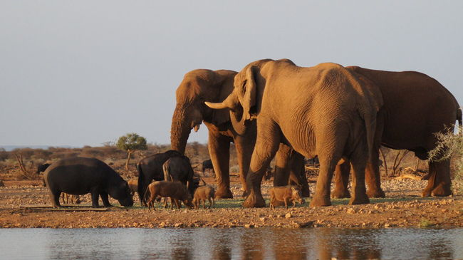African Elephant Animal Themes Animal Wildlife Animals In The Wild Day Drinking Elephant Herd Horizontal Large Group Of Animals Nature No People Outdoors Sky Young Animal