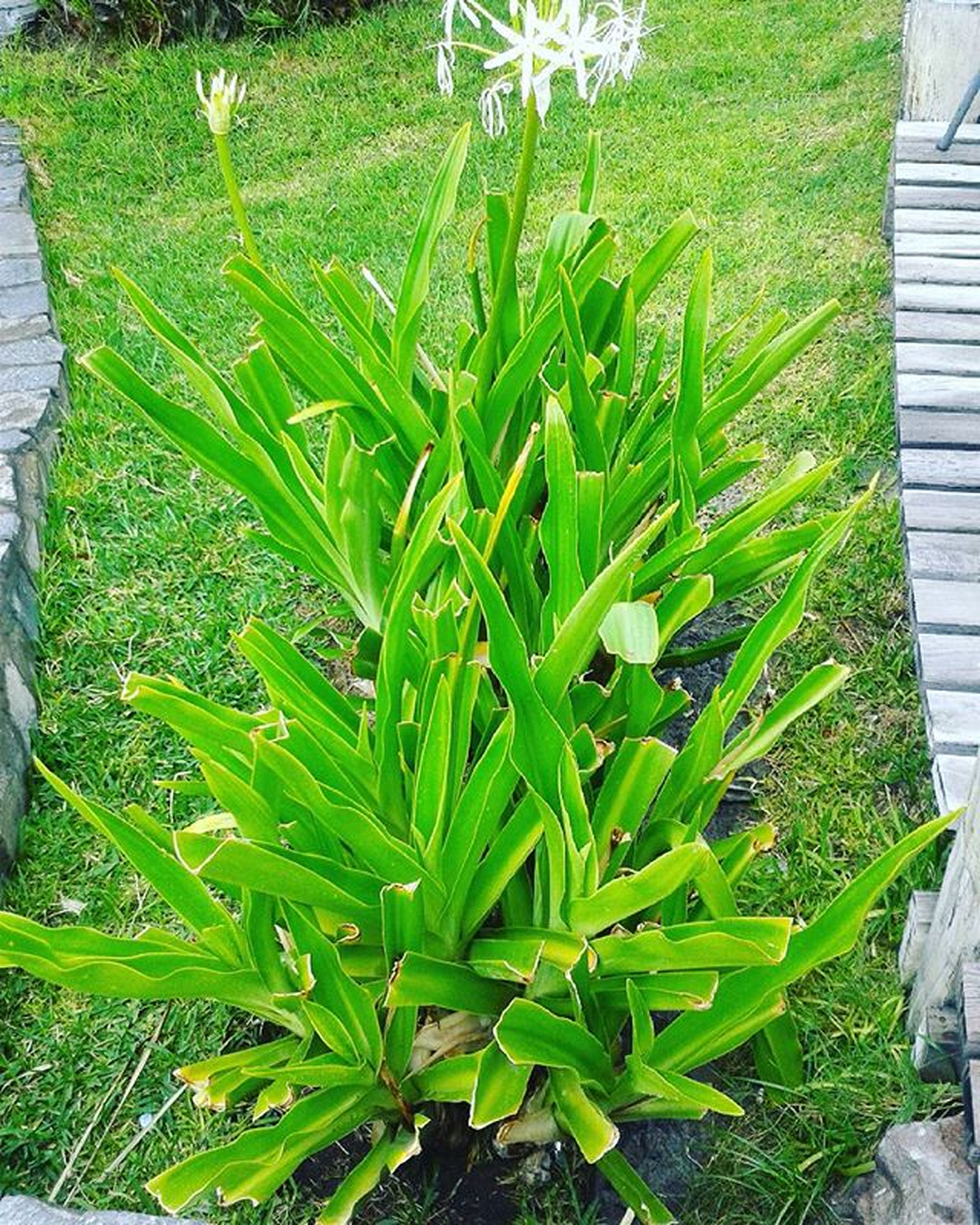 green color, growth, plant, leaf, high angle view, grass, nature, growing, sunlight, outdoors, day, beauty in nature, field, no people, front or back yard, green, freshness, tranquility, close-up, lush foliage