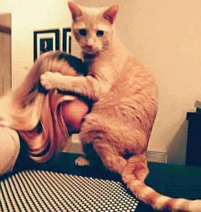 Cat♡ Cat Lovers Libya Tripoli Misrata Dog❤ Mişrātah Taking Photos Bengazi Tribals Cat Selfie... Cats 🐱 Cat Cats Cats Of EyeEm