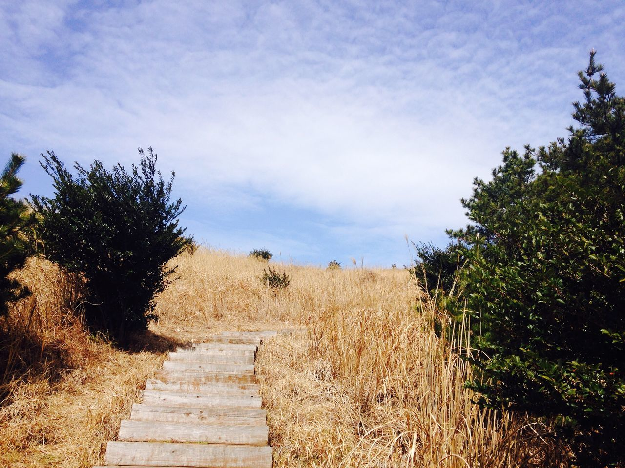 steps, sky, tree, steps and staircases, growth, nature, cloud - sky, day, outdoors, scenics, no people, beauty in nature