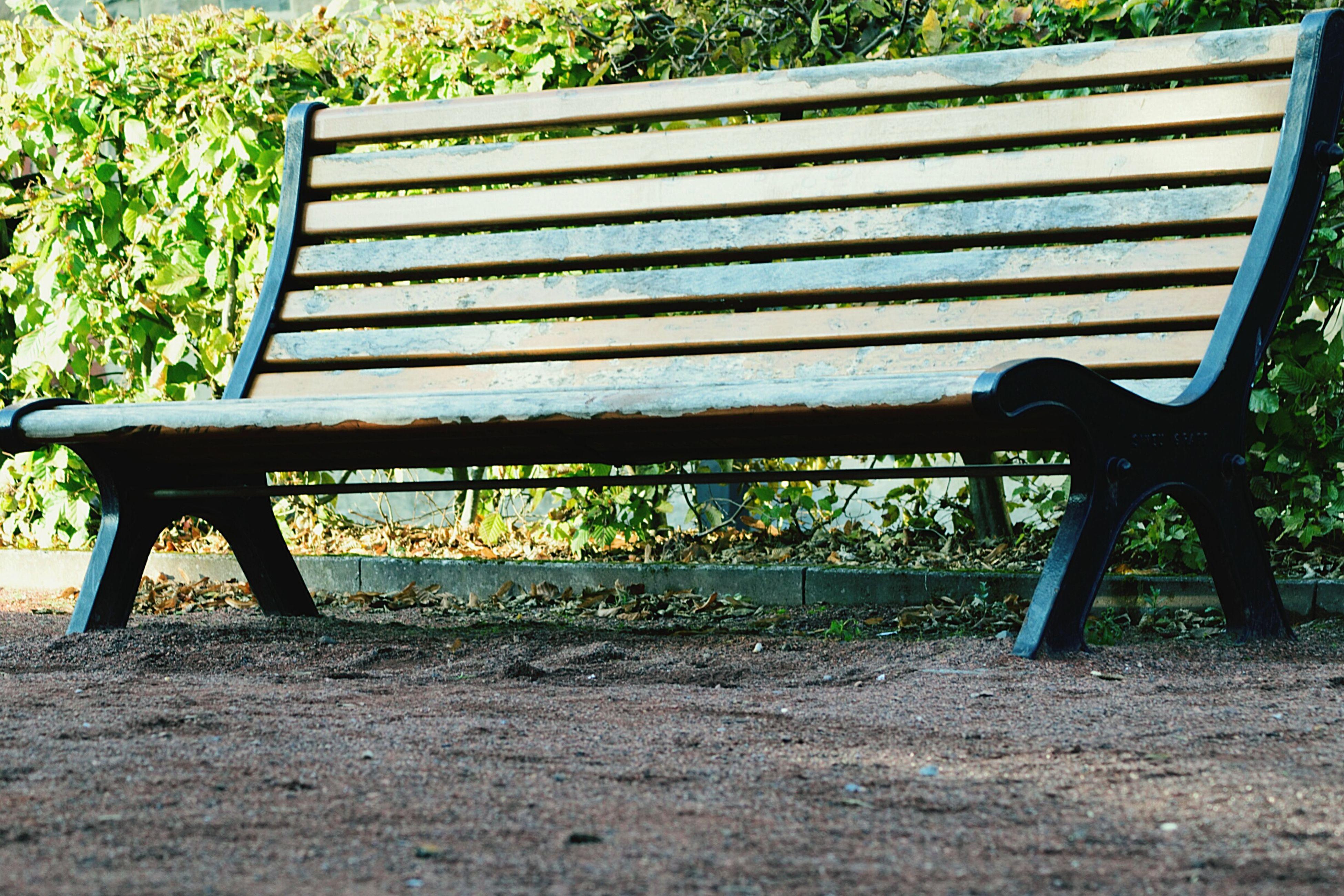 empty, bench, park bench, absence, wood - material, park - man made space, wooden, plant, park, outdoors, seat, paving stone, tranquility, field, formal garden, green color, day, footpath, blue, no people