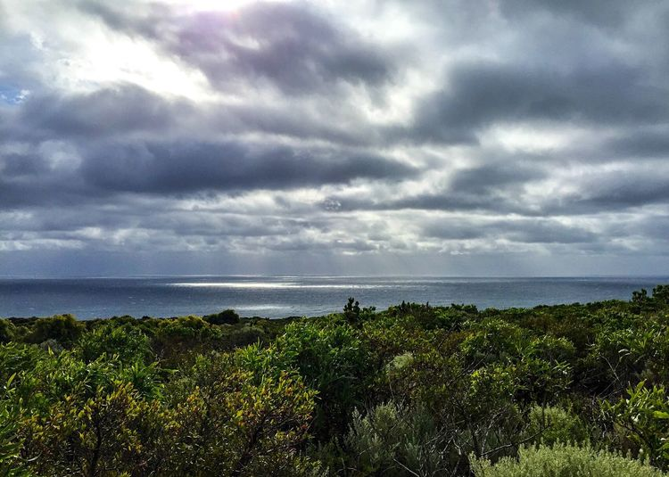 Stormy Skies: Indian Ocean at Cape Gloomy Nature Walk Rain Clouds Clouds Stormy Sky Stormy Weather Dark Skies Rainy Day Nature Photography Overcast Green Coastal Dune Plants Plants Coastal Dunsborough Western Australia Cape  Indian Ocean Seascape Sea Sea And Sky Ocean View Australia Storm Approaching Ocean Photography