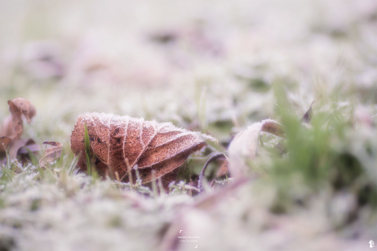 Ice cover Nature Beauty In Nature Freshness Fragility Tranquility Photographer Cold Temperature Frozen Outdoors Beauty In Nature CreativePhotographer Garden Winter Weather Photography Atmosphere No People