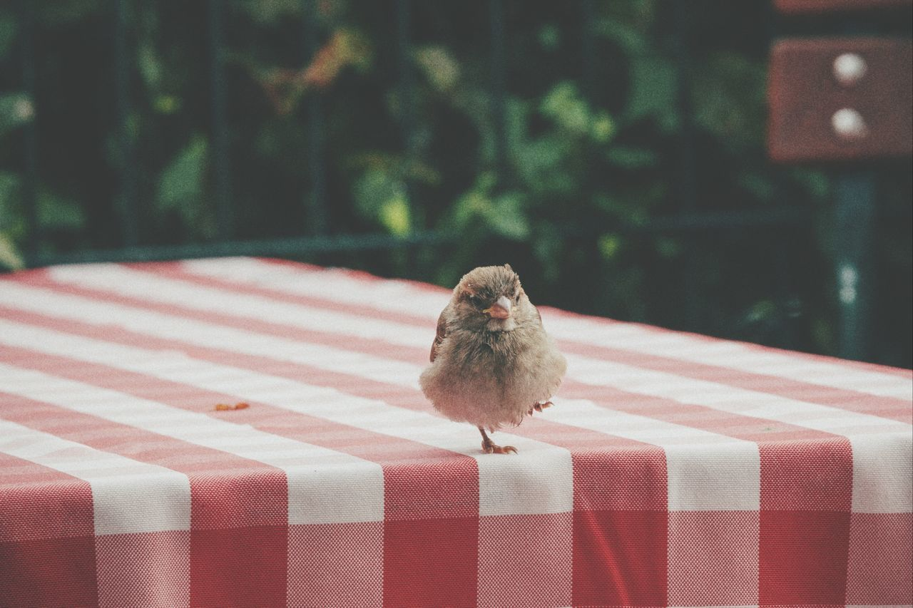 Beautiful stock photos of table, Animal Themes, Animals In The Wild, Berlin, Bird