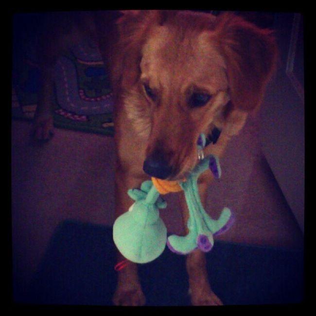 Zaashila LaMejorPerra Cute Pets I Love My Dog