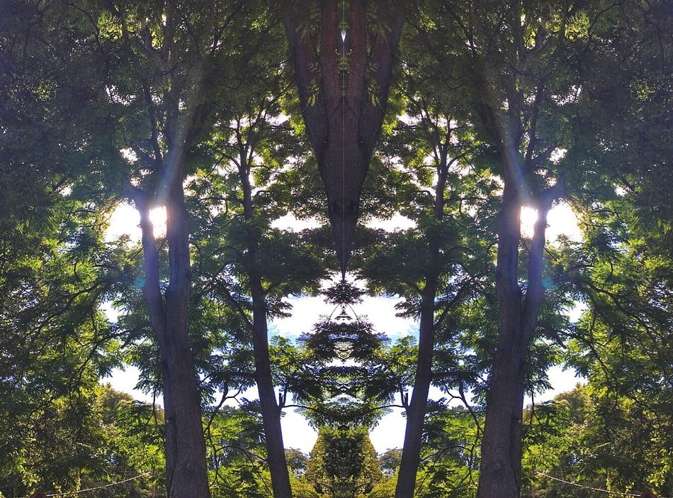 The trees are alive 😍 Editing Edit Faces In Places Trees Mirrored Image Mirror Picture Sun Rays Check This Out Photography Simplicity Sunshine ☀ Creative Light And Shadow Creativity Creative Femalephotographerofthemonth Creative Power Fun Seeing Things See What I See Hello World Imagination From My Point Of View IPhoneography 😳🙋🏻💕😘👉🏼