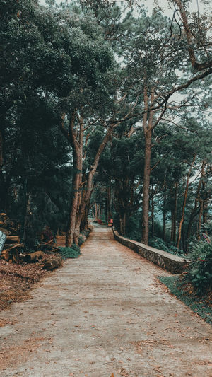The path I choose Baguio City Philippines Summercapital Jlex95 Tree Outdoors Nature The Way Forward Day No People Tranquility Beauty In Nature Scenics Forest