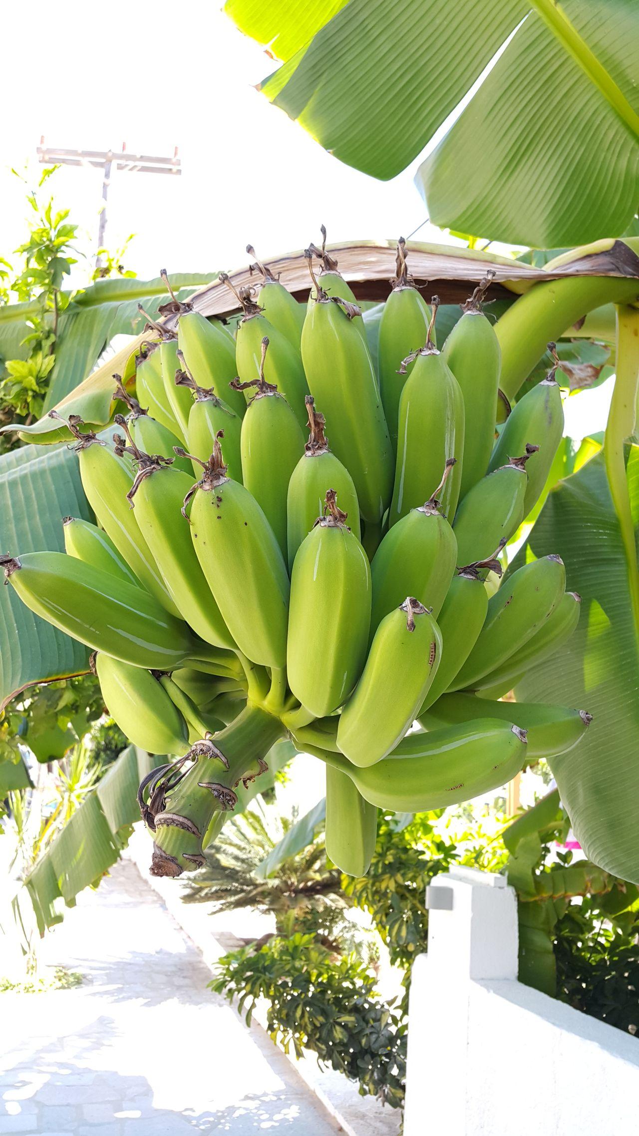 Colour Of Life Beautiful Nature Taking Photos Hello World Natures Gift Summer in Greece Bananas of Kalamata