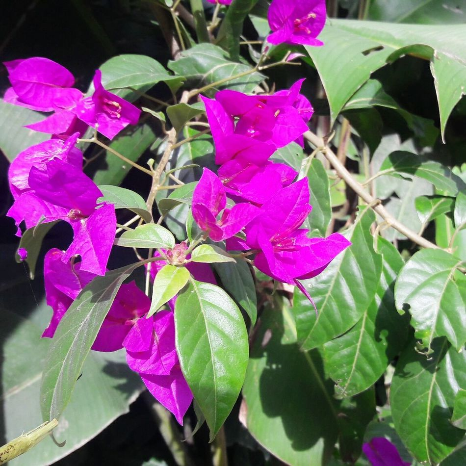 Purple Plant Leaf Nature Growth Beauty In Nature Outdoors Day No People Flower Close-up Fragility Freshness Flower Head