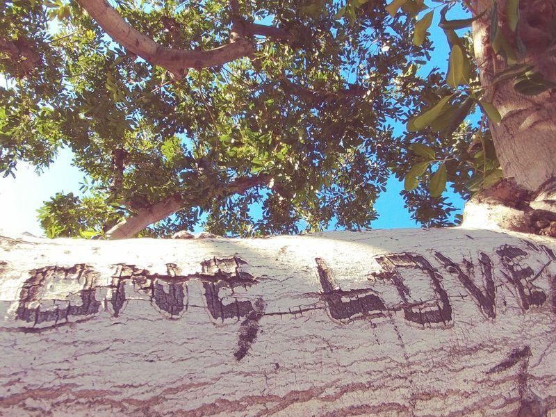 Tree No People City Tree CloseShots Oakstrails Photos Clear Sky ArtWork Art Nature Graffiti Art Graffiti Graffiti Love Graffiti Lover Graffiti On Trees Graffiti On Tree Tree Graffiti Day Daytime Tree Photography Trees And Sky Tree Limb Tree Limbs Sky Leaves🌿 Leaves EyeEmNewHere