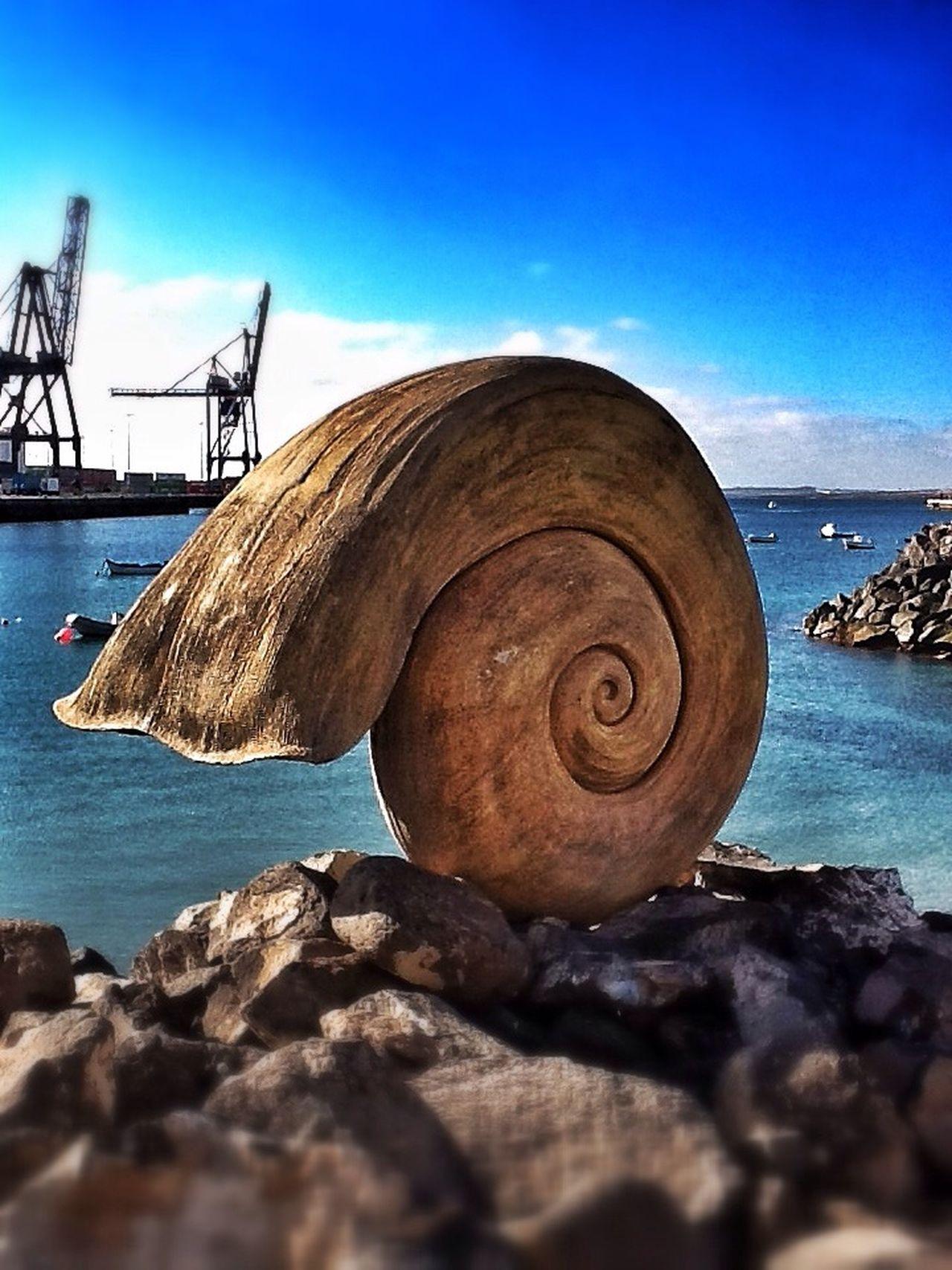 Fuerteventura Caracola Snail Puerto Del Rosario