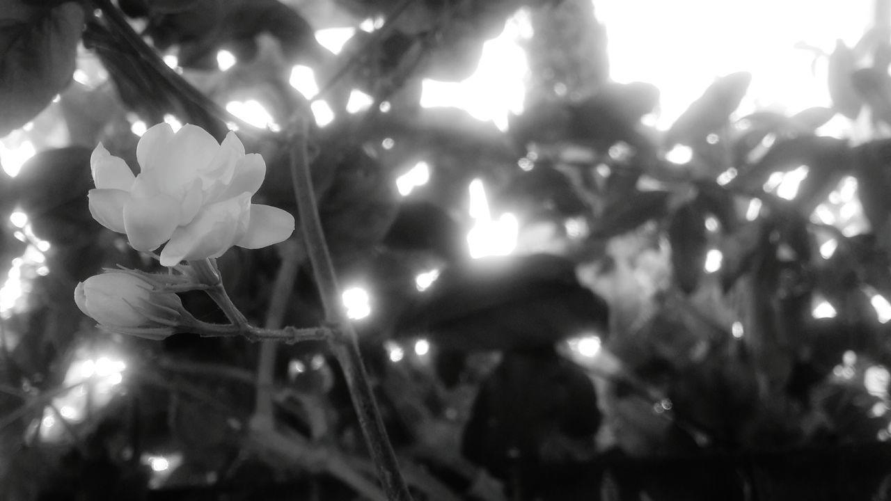 לבנה בוקר Black & White Balck And White Blackandwhite Blackandwhite Photography Black And White Photography Sad :( No Color